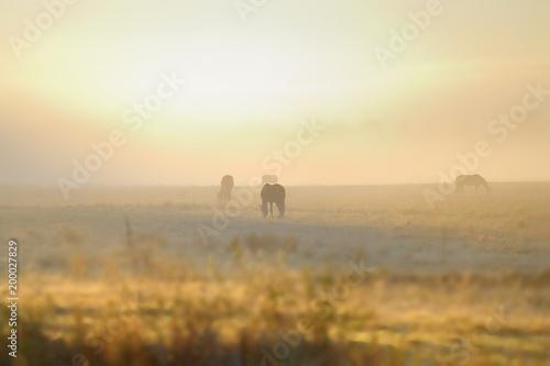Fotobehang Paarden HORSES grazing in mist, dawn, Umzimkulu Valley, Underberg, South Africa