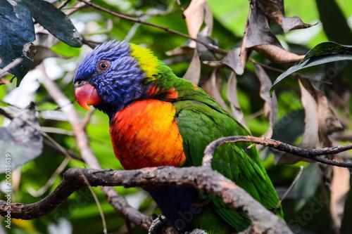 Plexiglas Papegaai Colored Tropical Parrot