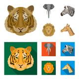 Tiger, lion, elephant, zebra, Realistic animals set collection icons in cartoon,flat style vector symbol stock illustration web.