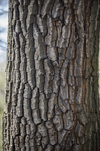 hard structured tree skin  - 200044277