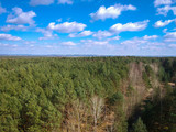Aerial top view of the forest in spring time