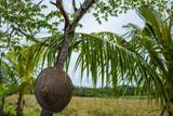 View on rice fields in Canggu, Bali