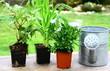 jardinage,arrosoir,pot de fleur,et graines,concept
