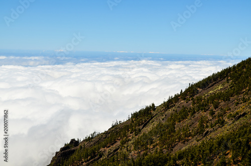 High Clouds over Pine Cone Trees Forest - 200071862