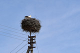 Stork in the nest on a power line