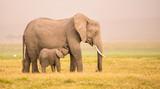 Fototapeta Sawanna - Afrikanische Elefanten-Mutter und ihr Kind in der Savanne © Martina Schikore