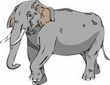 elephant, animal, cartoon, illustration, cute, mammal, isolated, wild, wildlife, green, fun, rhino, africa, drawing, pink, baby, animals, african, zoo, big, love, flower, happy, safari, comic