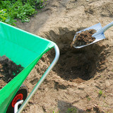 Planting plants step by step / ornamental shrub / Thuja Golden Smaragd - peat fertilization  - 200082894