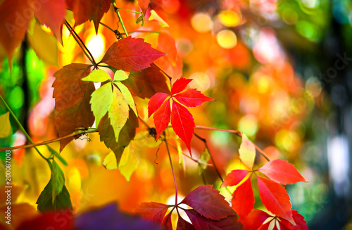 Foto op Canvas Herfst Autumn leaves background