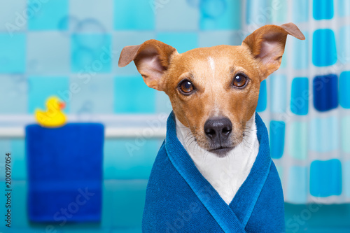 Poster Crazy dog dog in shower or wellness spa
