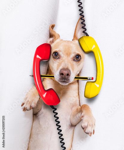 In de dag Crazy dog burnout dog at work