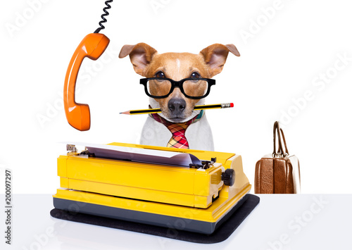 Poster Crazy dog office worker boss dog