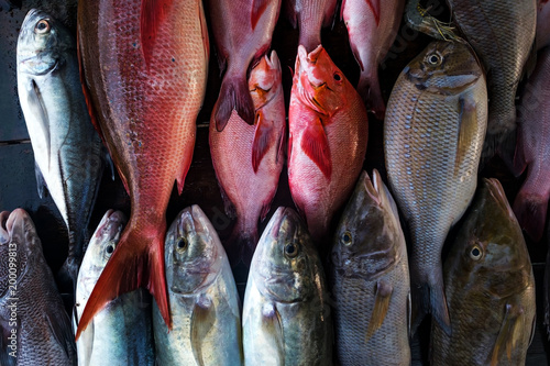 Fresh fish in the market close up. Buy marine food in local shop - 200099813