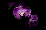 Fake purple and pink orchid flower made from Material in the dark, Cape Town, South Africa