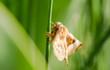 Motte Makro Detail Pflanze