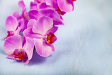 Orchid (Phalaenopsis) on a blue background.