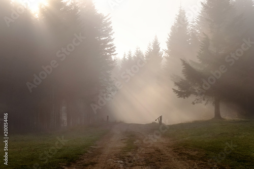 Foto op Canvas Natuur Ground road in the Carpathian forest on a foggy day