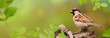 Leinwanddruck Bild - Vögel 82