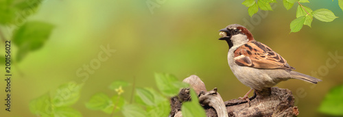 Leinwanddruck Bild Vögel 82