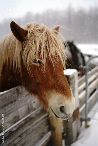 冬の馬 © makieni
