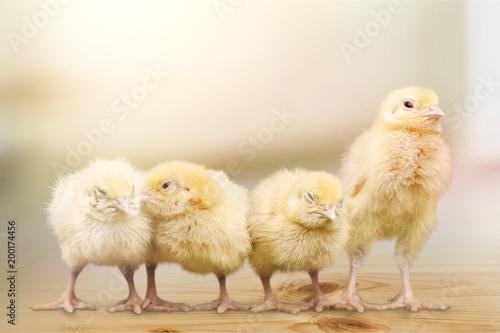 Foto Murales Chick.