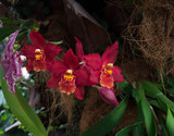 Surprisingly beautiful red orchids.