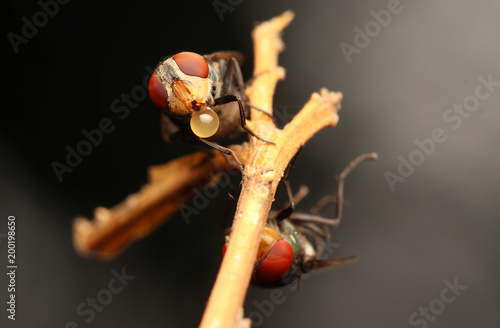 Foto Murales Flies with red eyes