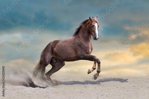 Red horse run in desert dust against blue sky - 200201601