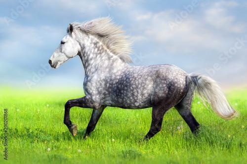 Fotobehang Paarden Horse with long mane run free in green grass