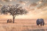 elephant in Serengeti national park ,tanzania