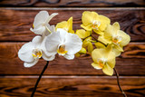 White and yellow orchids on brown background