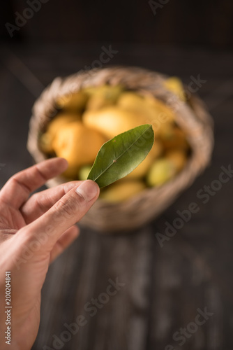 Collection of lemons in the basket