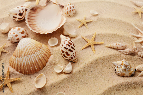 seashells on sand beach