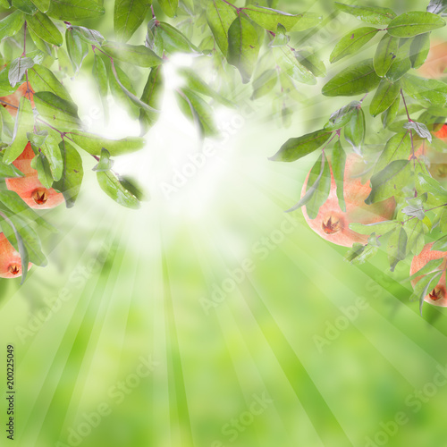 Pomegranate on abstract blurred background. Green garnet tree leaves and red fruit on soft focus background