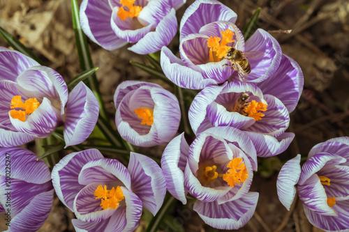 Plexiglas Bee Spring has come