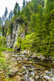 Spring landscape of mountain stream in canyon with flowing water from the source