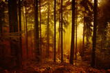 Magical morning orange red colored foggy forest tree landscape. - 200228043