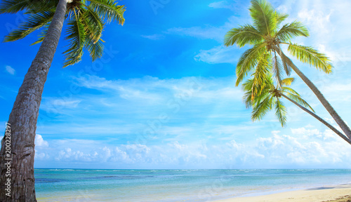 Keuken foto achterwand Tropical strand Palm trees on tropical beach.