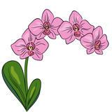 vector color pink orchid flower plant on white exotic tropical floral pattern on white