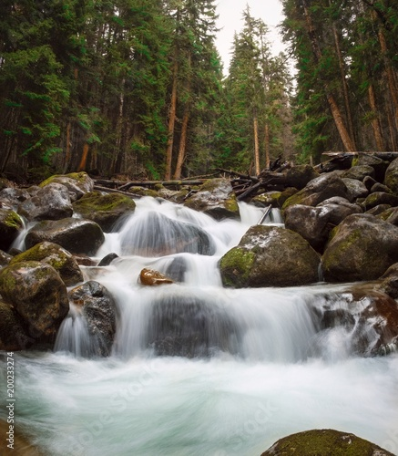waterfalls and rapids of the mountain river, streams of pure river water flow through the rocks surrounded by mountainous coniferous forests in early spring