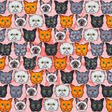 Hand drawn cats  illustration pattern.