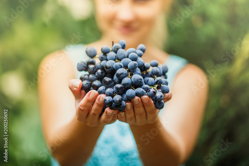 the girl is holding a fresh juicy ripe grapes