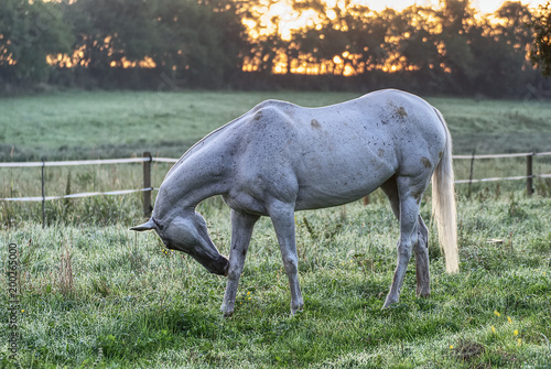 Fotobehang Paarden Horse on a field early in the morning with a colorful background