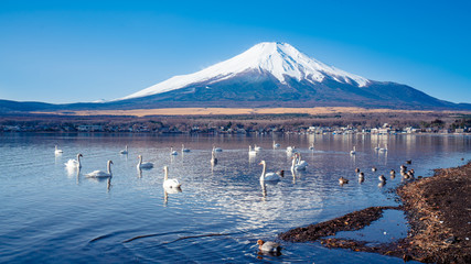 Stunning View of Fuji Mountain