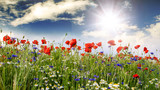 Summer happiness: meadow with red poppies :) - 200288667