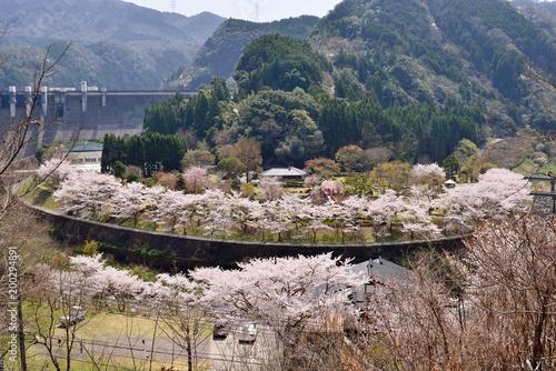 Foto op Aluminium Cappuccino 渓石園の桜