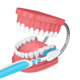 3d render of jaw model with toothbrush over white - 200327024