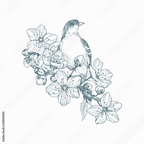 Vector Illustration Of Hand Drawn Bird On Blooming Brunch Graphic Style Beautiful