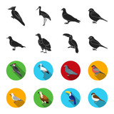 Gull, toucan and other species. Birds set collection icons in black,flet style vector symbol stock illustration web.