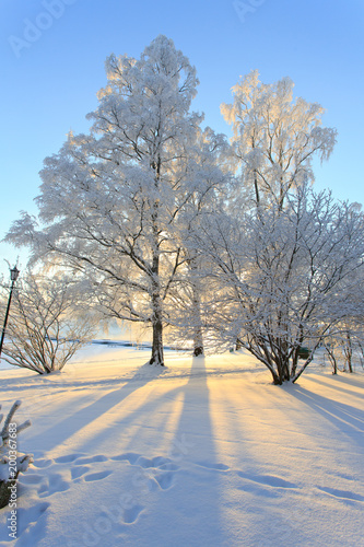 Foto Murales Winter sun shine behind snow filled fairytale trees